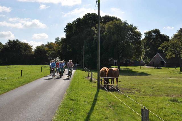Fahrradgruppe fährt in Ayenwolde an Pferdeweide vorbei