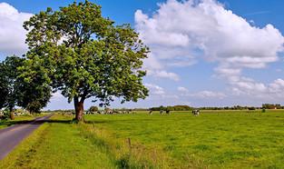 """Grüne Weide, blauer Himmel und Ostfriesische """"Schäfchen-Wolken"""""""